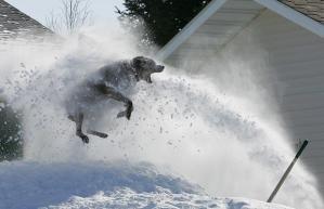 Snow-Dog_1365776i